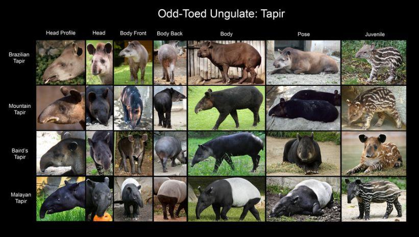 tapirkarta